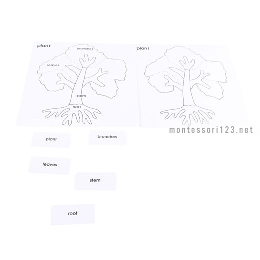 Botany_Puzzle_Activity_Set_2.jpg
