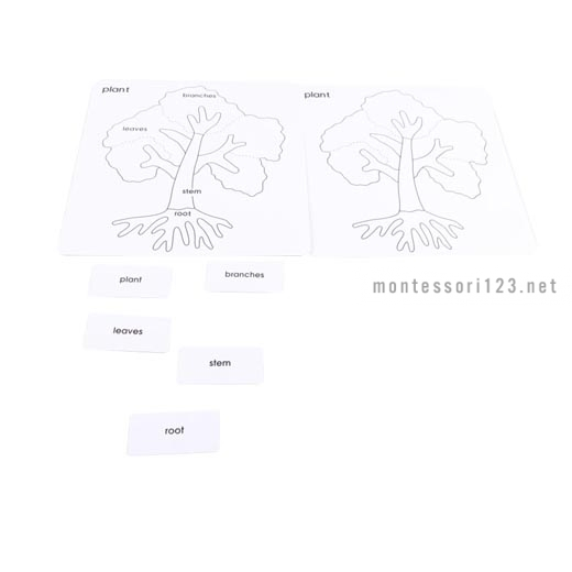 Parts_of_the_Tree_Card_Set_1.jpg