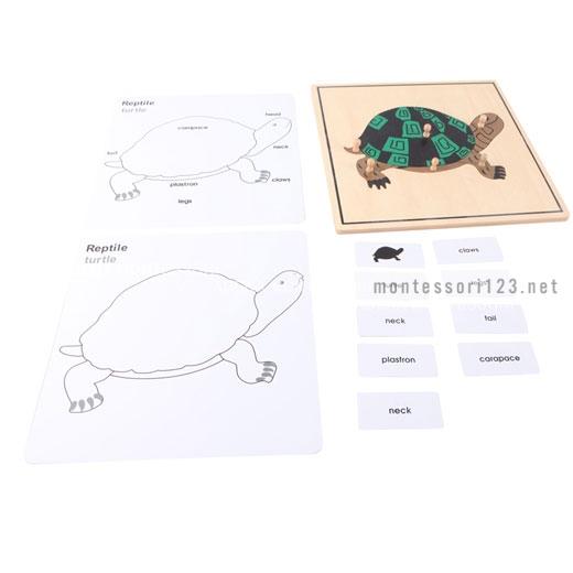 Turtle_Puzzle_2.jpg