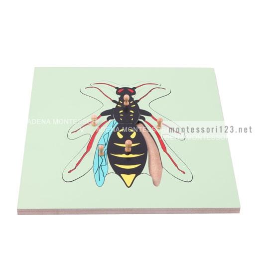 Wasp_Puzzle_2.jpg